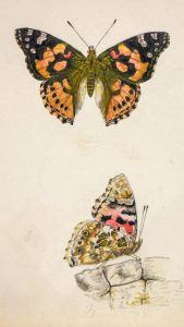 probably 1838. Carl Hassenpflug (1824-1890). Butterflies, feather and water color, Germany © Stadt Kassel, holdings of the Grimm Collection. Inventory number 814
