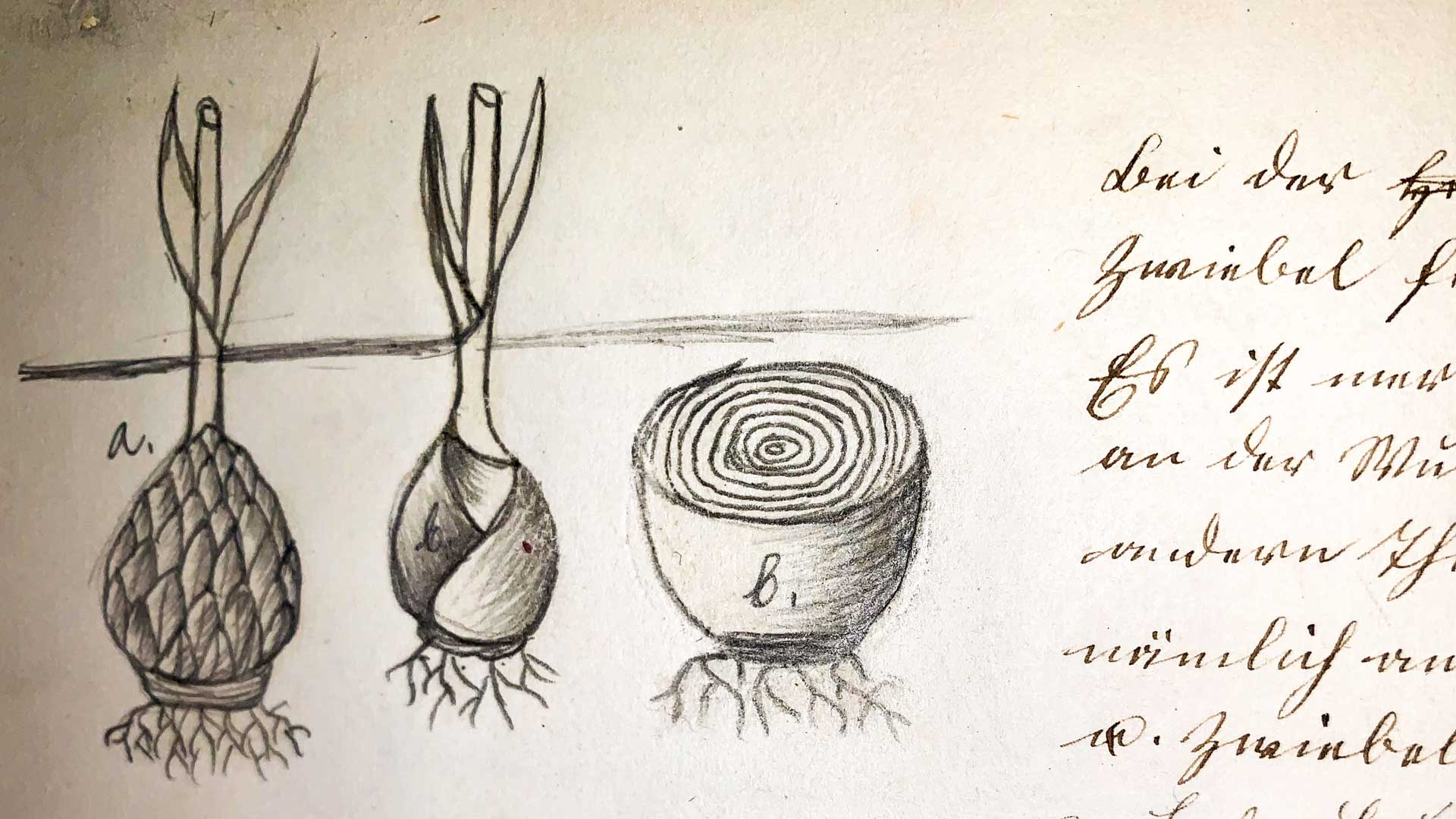 1855, Botany exercise book by J. Gesser (15 years?) © Ströter-Bender Collection